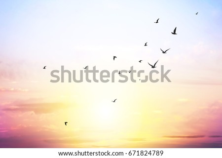 blue sky with clouds and seagull silhouette  #671824789