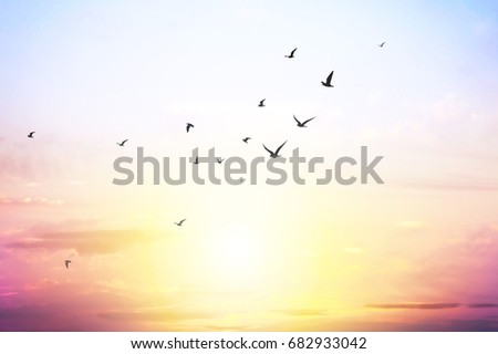 blue sky with clouds and seagull silhouette #682933042