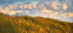 Blue sky with lots of glowing cumulus clouds above the Baltic sea shore after thunderstorm at sunset, green dune grass close-up. Idyllic landscape. Warm sunlight. Travel destinations, eco tourism