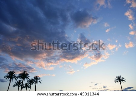 Blue sky with pink gray clouds sunset and palm trees