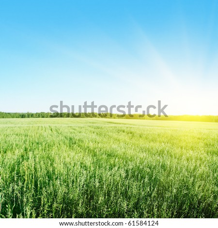 Blue sky with sun and field of green wheat.