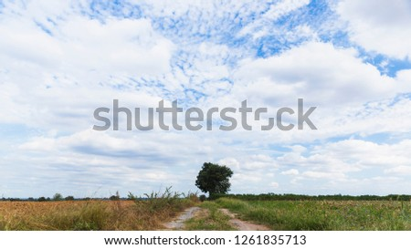 Blue sky with white cloud background, low angle.low angle. #1261835713