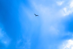 Blue sky with white clouds and a flying bird.