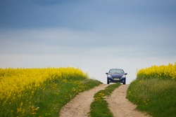 Blue small car rides on a rural road near field rapeseed