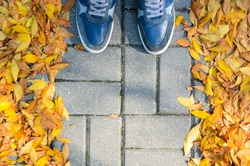 Blue Sneakers on a Gray Paving Sidewalk Covered with Fallen Leaves Top View.