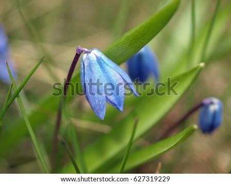 Blue spring flowers #627319229