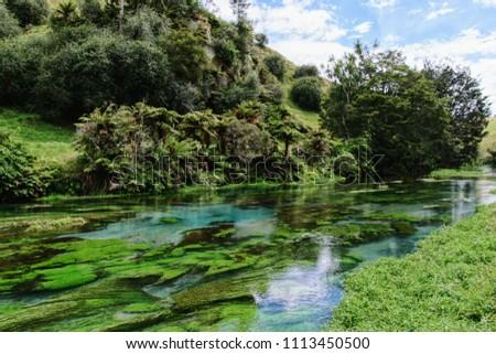 Blue spring with beautifull At Te Waihou Walkway...