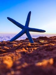 Blue starfish on a sandy beach
