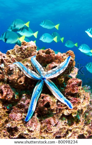 Blue starfish on the reef