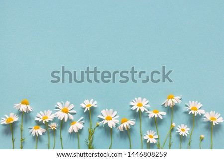 Blue summer background with daisies, copy space #1446808259