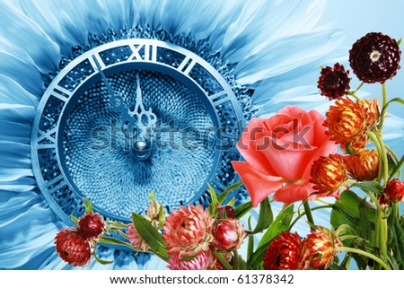 Blue Sunflower-clock indicative approach of New Year and summer flowers