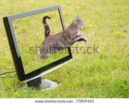 Blue tabby cat leaping out of a computer monitor onto green grass