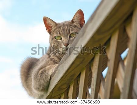 Blue tabby cat resting on deck railing