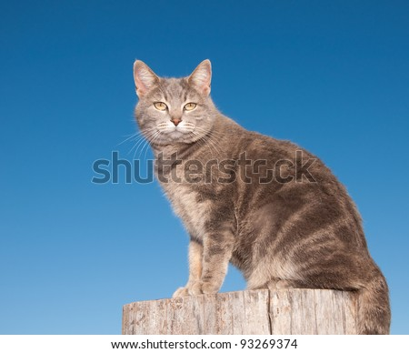 Blue tabby cat sitting on top of a log against clear blue sky, looking at the viewer