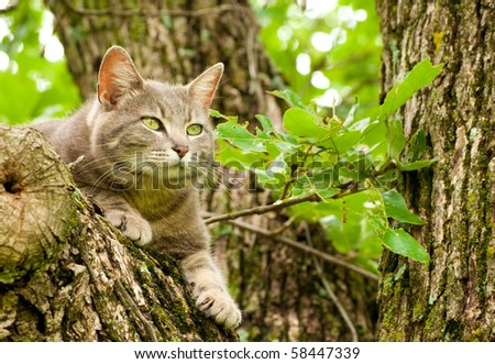 Blue tabby cat with green eyes up in a tree