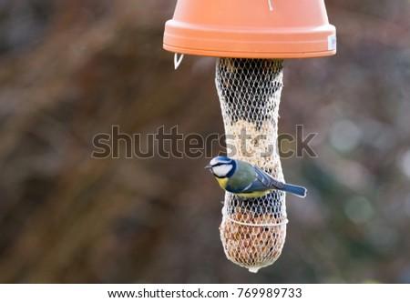 Blue tit bird on a master dumpling #769989733