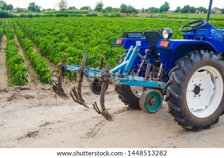 Blue tractor with a cultivator plow and the green field of the Bulgarian pepper plantation on the background. Farming, agriculture. Agricultural machinery and equipment, work on the farm. harvesting
