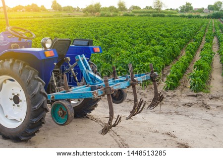 Blue tractor with a cultivator plow on the background of the green field of Bulgarian pepper plantation. Farming and agriculture. Agricultural machinery and equipment, work on the farm. harvesting