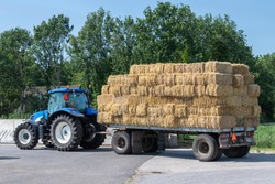 Blue tractor with old farm wagon with flat rectangular straw bales stacked in a livestock farming in the Netherlands.