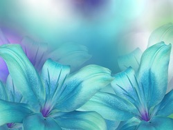 blue- turquoise lilies  flowers,  on turquoise-purple-blue blurred background .  Closeup.  Bright floral composition card for the holiday.  Nature.