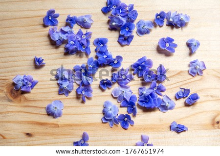 Blue Veronica flowers on wooden background ストックフォト ©