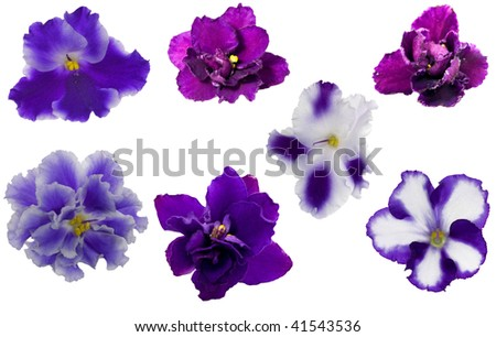 blue violet flowers collection isolated on white background