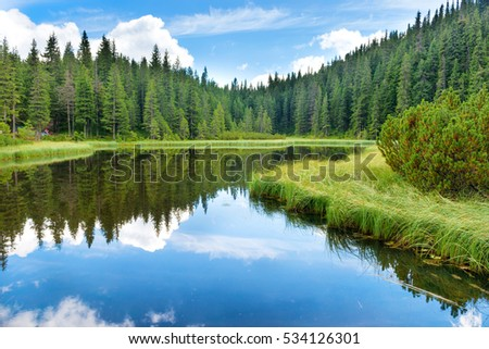 Blue water in a forest lake with pine trees #534126301