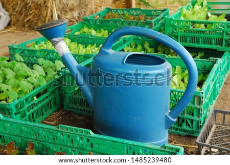 Blue watering can and baskets of seedlings