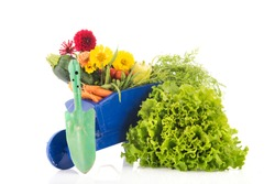 Blue wheelbarrow full with healthy vegetables and flowers isolated over white background