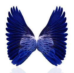 Blue wings isolated on white background.