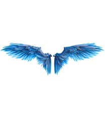 blue wings on white background