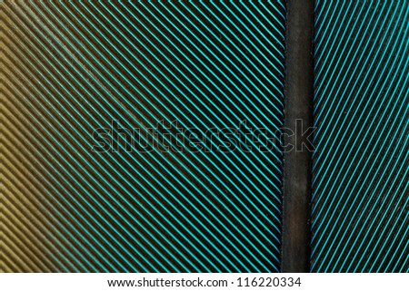 Blue Yellow Parrot Feather Close up Detail - stock photo