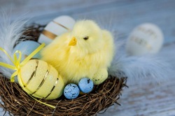 Blue, yellow, white eggs in the nest and yellow chicks on a blue wooden background. The minimal concept. An Easter card with a copy of the place for the text.