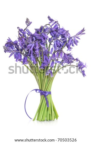 Bluebell flowers  tied in a bunch with ribbon, isolated over white background.