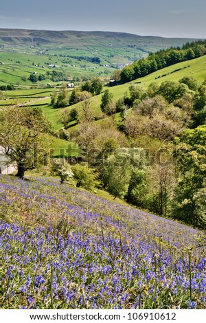 Bluebells growing on a sunny hillside above a lush green valley in Swaledale in the Yorkshire Dales National Park