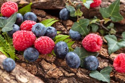 Blueberries and raspberries and forest plants. In forest environment.