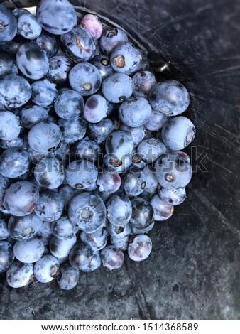 Blueberries freshly picked Ontario farm