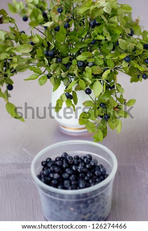Blueberries on a branch in the bowl