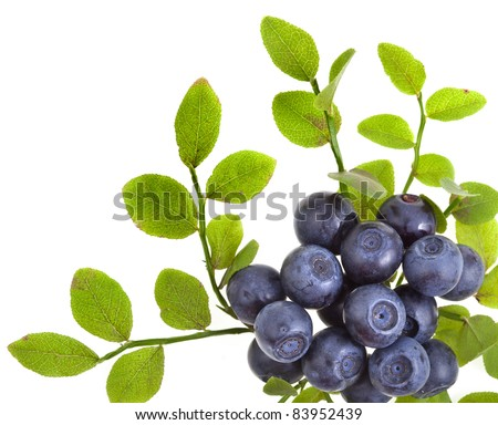 blueberry border closeup macro isolated on a white background