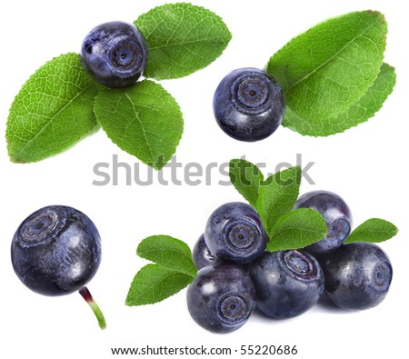 blueberry collection set closeup macro isolated on a white background