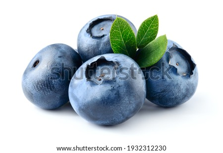 Blueberry isolated. Blueberry with leaves on white. Bilberry on white background. Full depth of field.