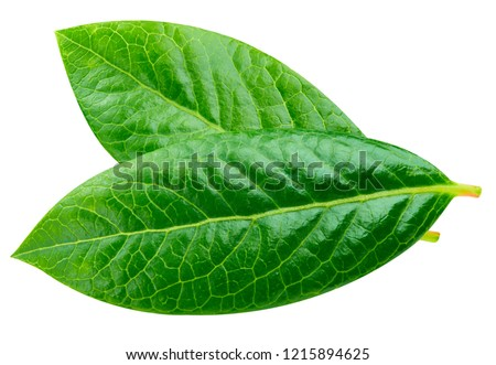 Blueberry leaves. Leaves isolated on white background Clipping Path #1215894625