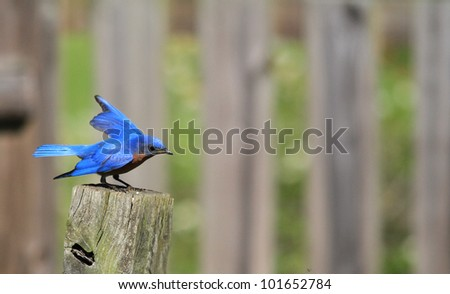 Bluebird on a summers day