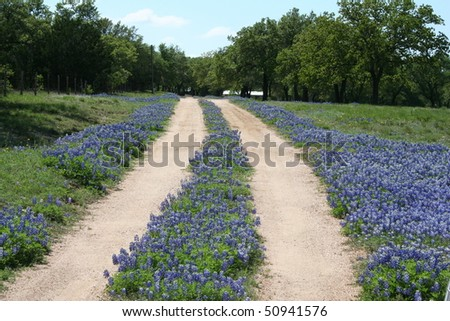 bluebonnet clip art. luebonnet clip art. stock photo : luebonnets; stock photo : luebonnets
