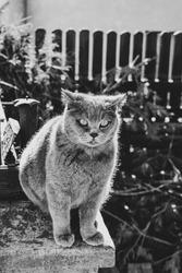Blueboy, greycat littleboy. Bluecat or blackandwhite cat?