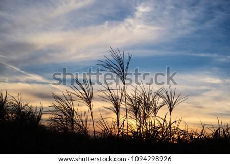 bluesky in reed #1094298926