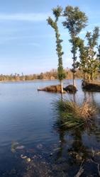 Bluewater lake near indore narmada water reserve trees in river. MU-LOK