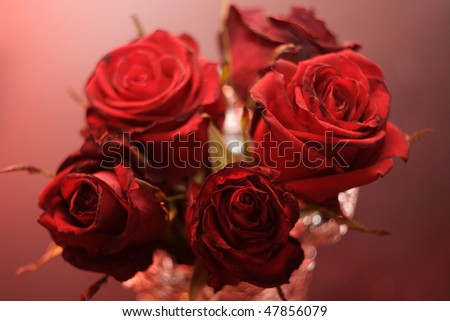 blur abstract background roses - stock photo