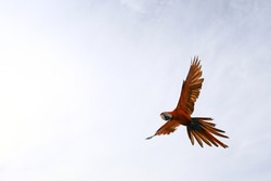 Blur and noise photo, colorful Macaw parrot