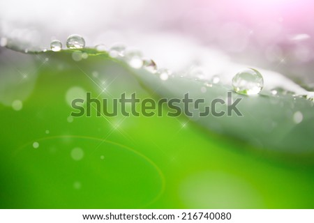 blur and soft focus of water drop on leaf with green color background